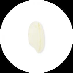 Arborio rice grain