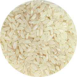 Carolino rice group