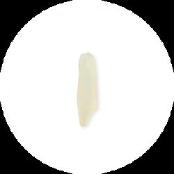 Long grain rice grain